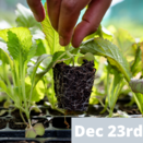 Grow Your Own Food Workshop (Adult) - Dec 23rd