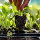 Grow Your Own Food Workshop (Adult) - Feb 8th