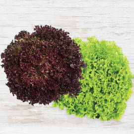 Organic Freeze Lettuce - Bunch