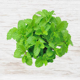 Organic Mint - Bunch