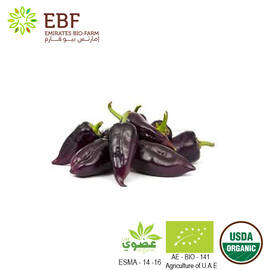 Organic Heirloom Serrano Purple Chili