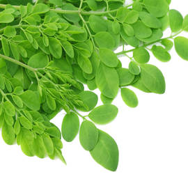 Organic Moringa fresh leaves, bunch