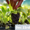 Grow Your Own Food Workshop (Kids) - Dec 23rd