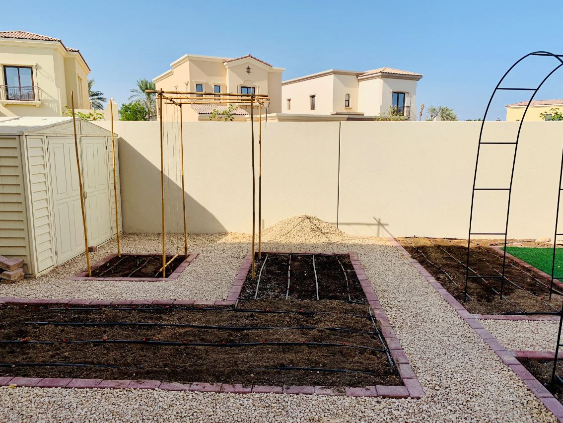 Planning A Vegetable Garden In Dubai Part 1 Emirates Bio Farm
